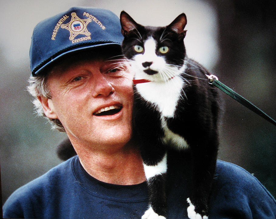 PRESIDENTIAL PETS CLINTON CAT SOCKS THE RALEIGH DEGEER AMYX COLLECTION THE AMERICAN HERITAGE COLLECTION WHITE HOUSE MEMORABILIA 